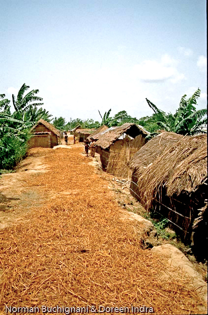 A recently settled part of the embankments, with the 'roadway' on top being used to dry fodder, Kazipur, Bangladesh