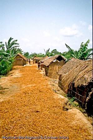 Embankment communities in Kazipur, Bangladesh are highly ordered
